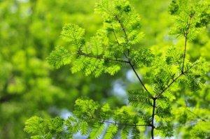 """中国十大珍稀植物银杏树上榜,第三被称为""""植物界大熊猫"""""""