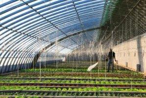 中国十大蔬菜种植基地,张掖上榜,第一是中国蔬菜之乡